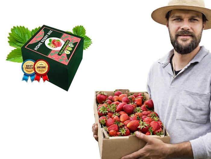 Home Berry Box házi készítésű földieper: hihetetlen terméshozam nagy és ízletes eprekből MÁR EGY HÓNAP ELTELTÉVEL!